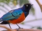 Ethiopia – Birds