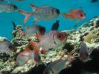 Seychelles – Underwater
