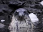 Antarctica – Mammals