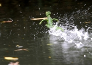 Basilisk running on water