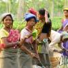 Work in a tea plantation