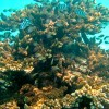 Coral Reef «City»