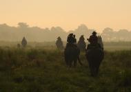 Early elephant ride – Kaziranga