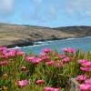 Pink flowers east coast