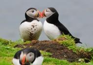 Scotland Loving life on Lunga Island