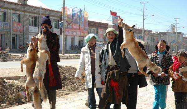 Tibet Wolf Hunters