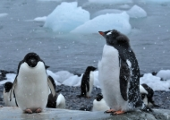 «Penguins weather today!»