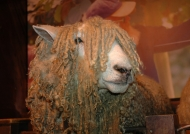Local famous sheep