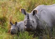 Kaziranga-One-horned Rhinos