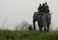 Early elephant ride for Rhinos