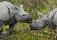 Rhino morning kiss