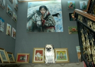 Lhasa in a big store