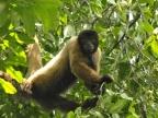 Amazonia – Monkeys
