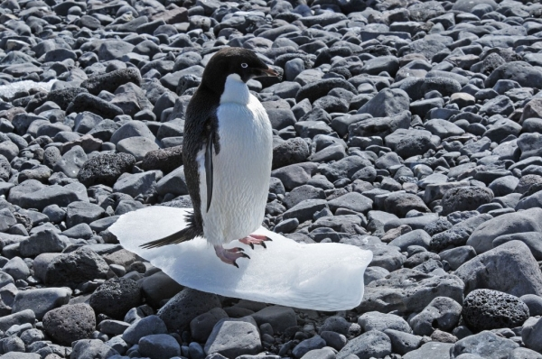 The end of Antarctica?