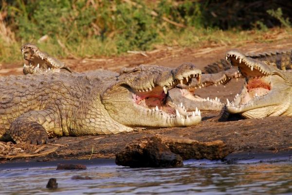 Ethiopia – «Crocodile Market» – Lake Chamo