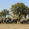 Elephants going to Waterhole