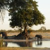 Mana Pools NP