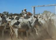 Gathering the Herd