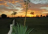 Pantanal Sunset
