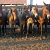 «Horse parking»