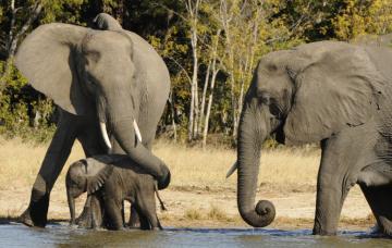Africa – Zimbabwe