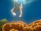 Bunaken – Corals