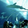 Sharks Tunnel