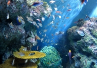 Corals & Marine Life