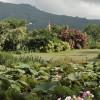 From Gardenia Garden