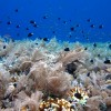 Fields of White Soft Coral