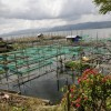 Fish farming-Lake Tondano