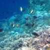 Cabbage Corals & Fishes