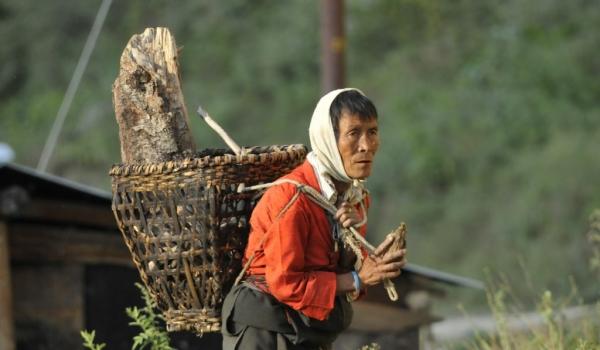 Transportation of firewood