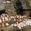 Tsa-tsa – offerings in holy cave