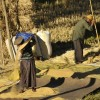 Winnowing & threshing rice