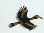 India – Birds