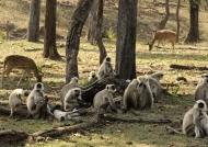 Langur committee