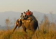 Elephant ride – Corbett N.P.