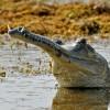 Batrachians & Reptiles