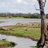 One of the lakes in Selous