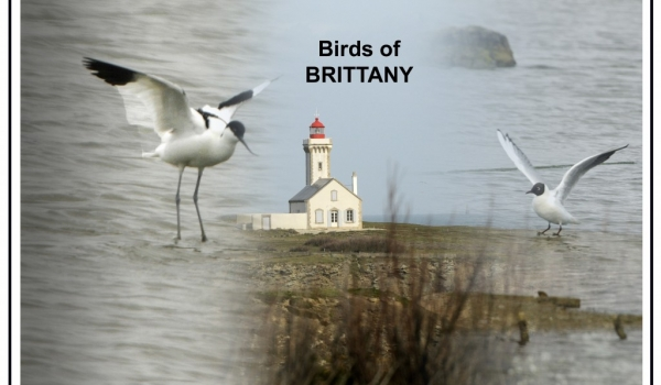 Birds of Brittany