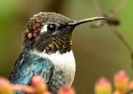 Same bird changing color