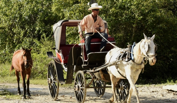 Carriage with a spare horse