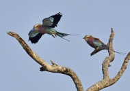 Courtship time
