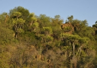 Euphorbias-Lebombo reserve