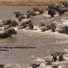 Checking Wildebeest « route »