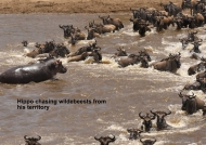 Checking Wildebeest «route»
