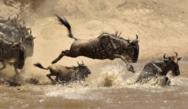 Family leaping into the Mara