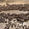 Herd of 10 to 15 000 Gnus