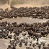 Herd of 10 to 15 000 Gnus
